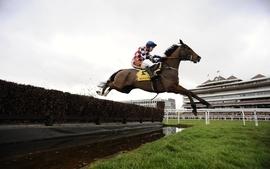 Sports horses horse racing riding wallpaper