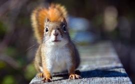 Squirrels 2 wallpaper
