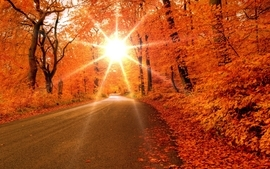 Sun autumn season streets orange roads wallpaper