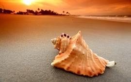 Sun beach sand seas tropical shell wallpaper