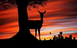 Sunset animals silhouette deer south africa johannesburg wallpaper