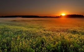 Sunset landscapes nature fields mist wallpaper