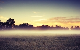 Sunset landscapes nature trees fields mist skyscapes wallpaper