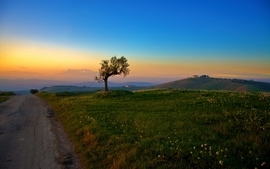 Sunset landscapes nature trees fields roads blue skies wallpaper
