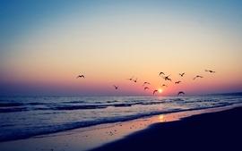 Sunset nature beach sea birds vintage seascapes wallpaper