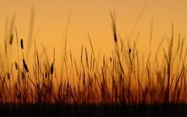 Sunset nature grass plants california wallpaper