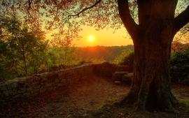 Sunset nature trees wallpaper