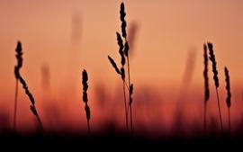 Sunsets closeup depth of field wallpaper
