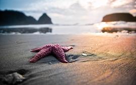 Sunsets closeup nature beach photography starfish macro wallpaper