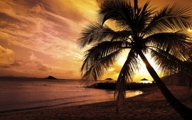 Sunsets clouds landscapes nature beach sand trees paradise palm wallpaper