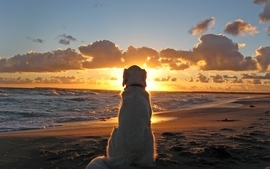 Sunsets dogs wallpaper