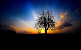 Sunsets landscapes nature trees photography sunbeams wallpaper