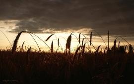 Sunsets nature fields wallpaper