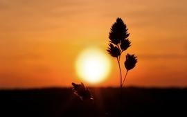 Sunsets sunrise landscapes nature wallpaper