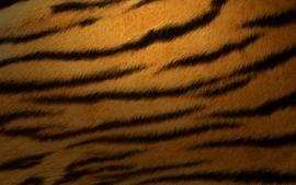 Tigers striped texture fur wallpaper