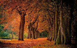 Trees autumn bench parks wallpaper