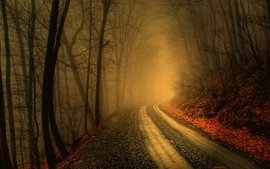 Trees autumn forest path fog mist roads wallpaper