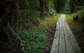 Trees autumn path boardwalk wallpaper