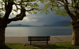 Trees bench wallpaper