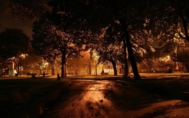 Trees cityscapes orange photography park yard wallpaper