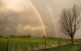 Trees grass double rainbow wallpaper