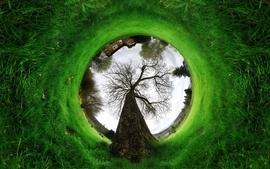 Trees grass photomanipulation fisheye wallpaper
