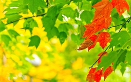 Trees multicolor leaves wallpaper