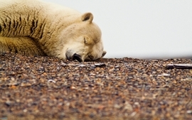 Video games sleeping polar wallpaper