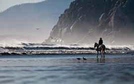 Water beach sea shore horses wallpaper