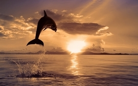 Water clouds nature sun animals dolphins sunbeams wallpaper