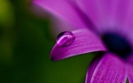Water drops macro purple flowers wallpaper