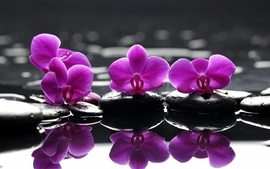Water flowers wallpaper