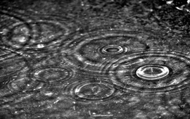 Water nature rain grayscale water drops wallpaper