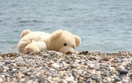 Water stuffed animals pebbles teddy bears wallpaper