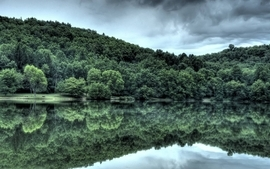 Water trees lakes wallpaper