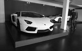 White cars lamborghini monochrome lamborghini gallardo wallpaper