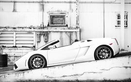 White cars lamborghini monochrome supercars lamborghini gallardo wallpaper