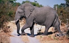 Wildlife crossing the road elephants botswana wallpaper