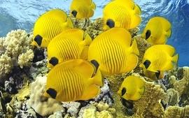 Wildlife fish wallpaper