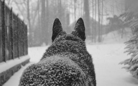 Winter snow animals dogs wallpaper