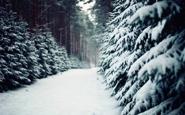 Winter snow trees depth of field wallpaper