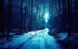 Winter trees roads wallpaper