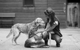 Women animals dogs friendship wallpaper