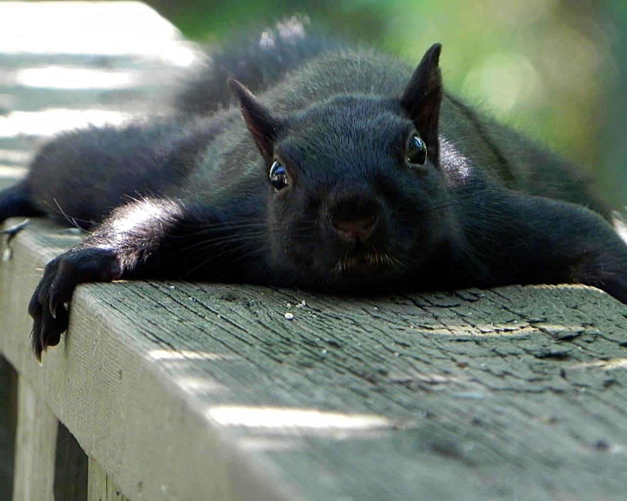 Animals funny squirrels (1280x1024)