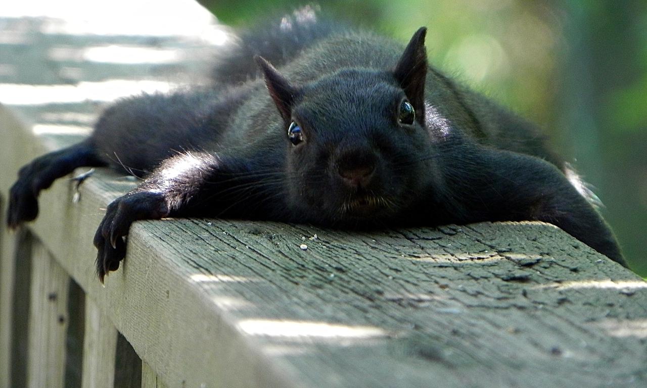 Animals funny squirrels (1280x768)