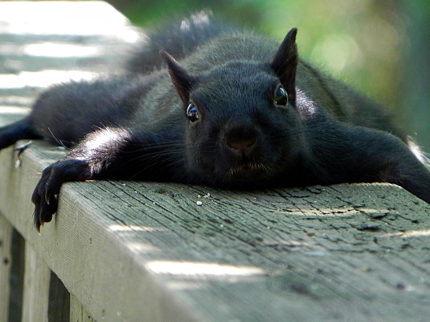Animals funny squirrels (1400x1050)