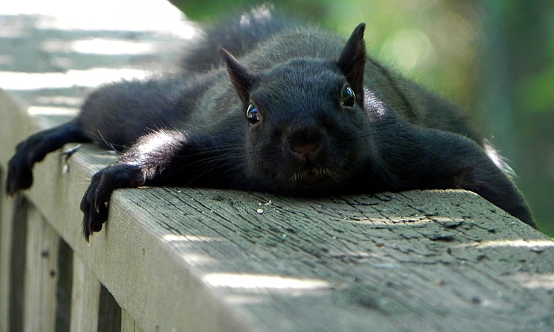 Animals funny squirrels (800x480)