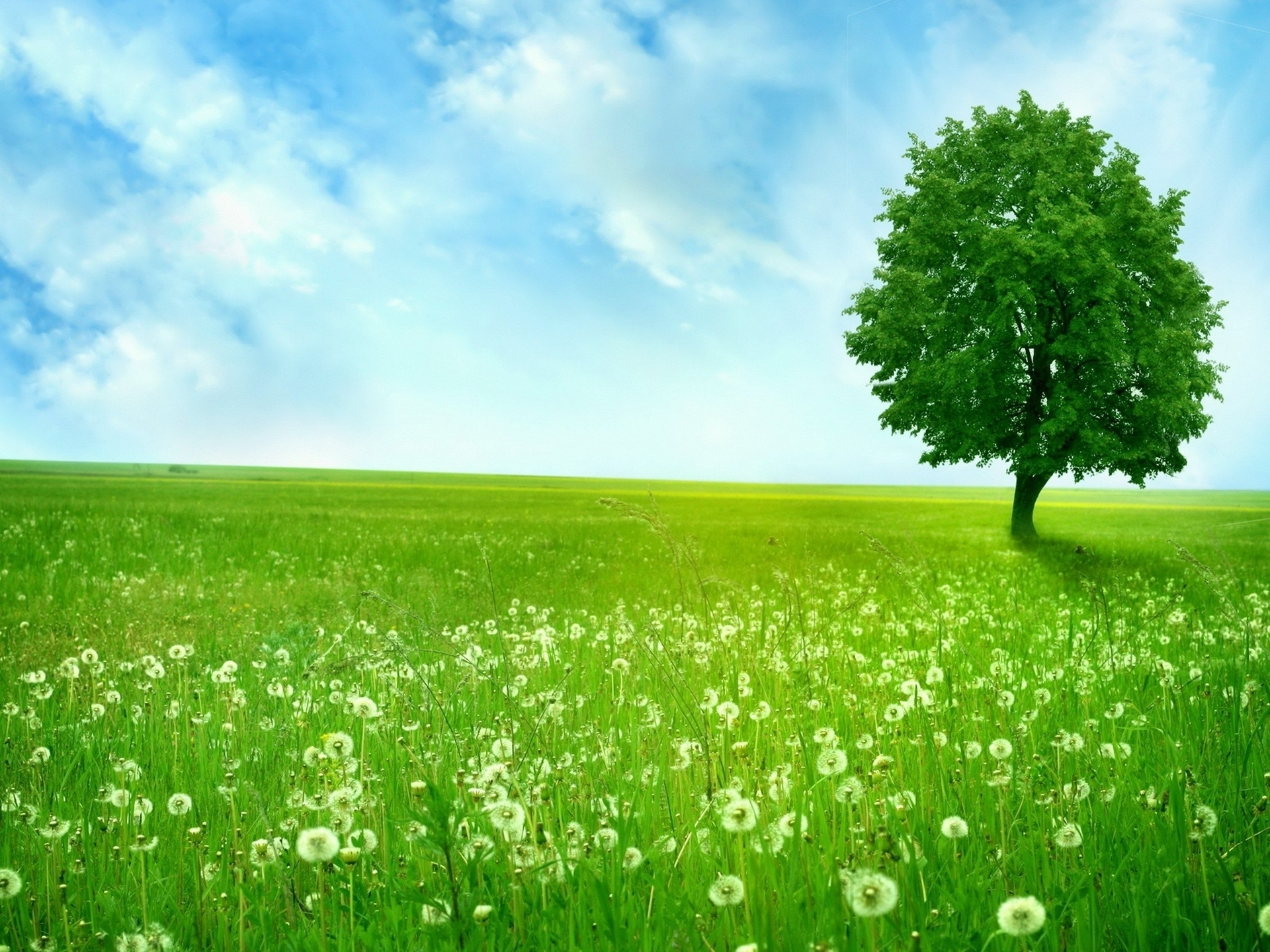 Green grass and trees background