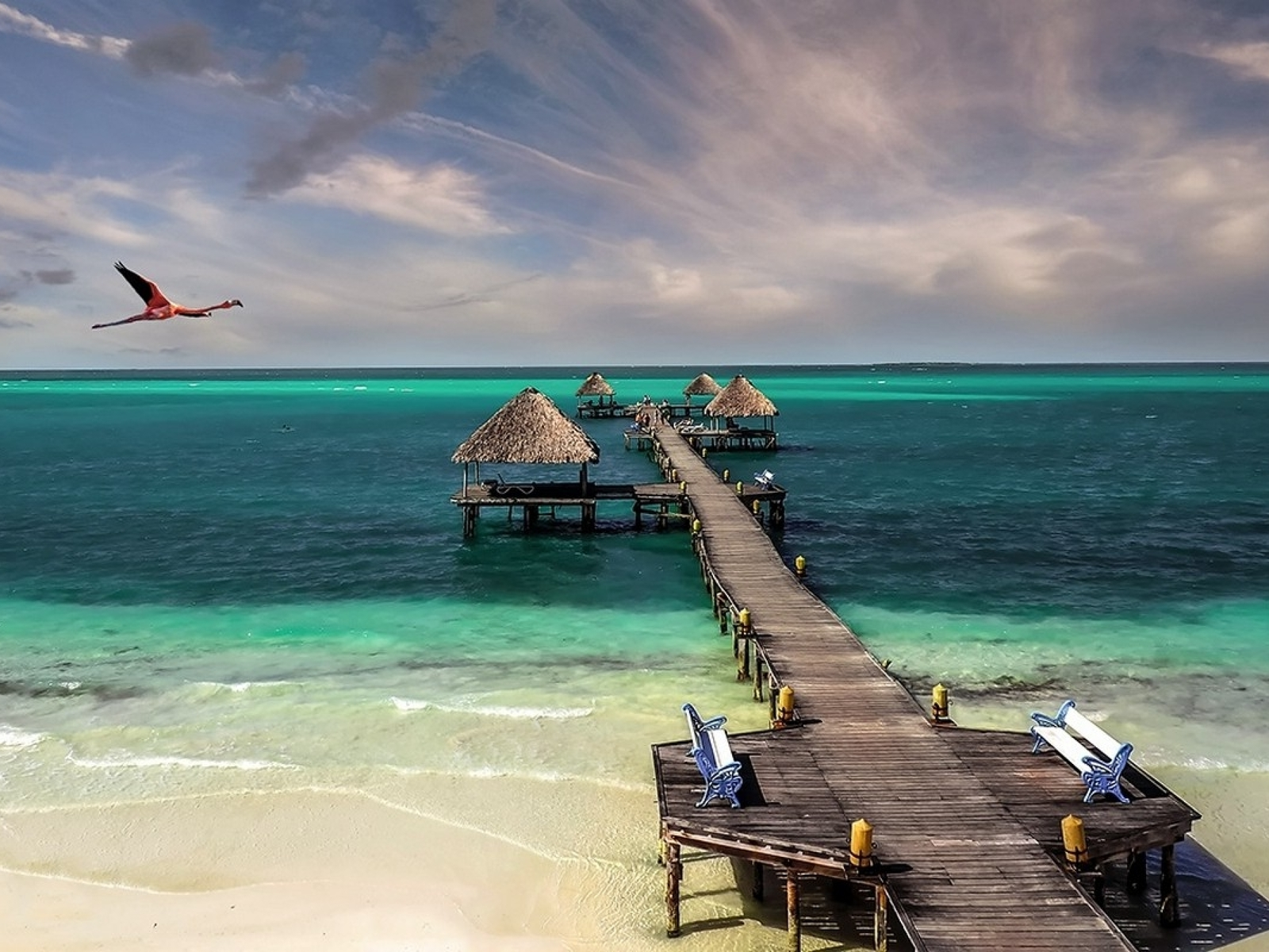 Cuba beach bird sea sand (1600x1200)