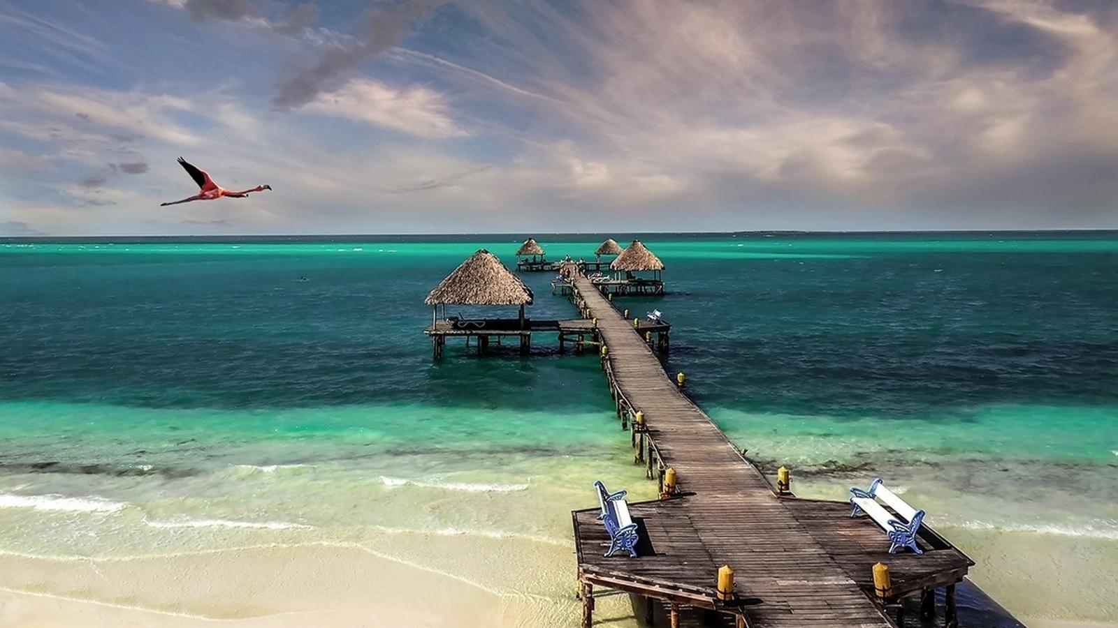 Cuba beach bird sea sand (1600x900)